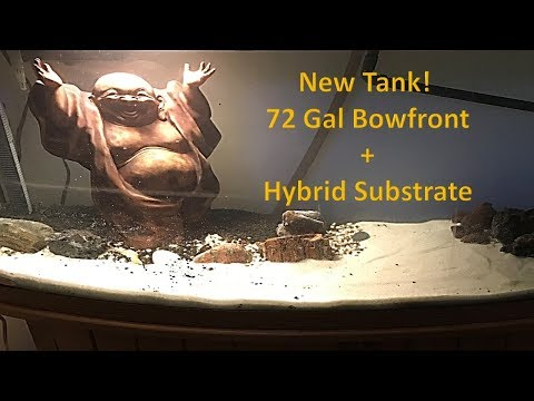 New Tank - Hybrid Substrate: Kitty Litter + Eco-Complete + Pool Filter Sand