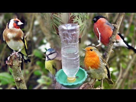 how-to-make-a-bird-water-feeder-|-diy-homemade-plastic-bottle-bird-water-feeder-|-bird-water-pot