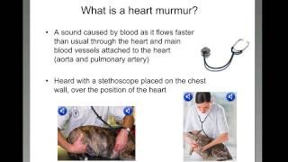 What is a heart murmur?