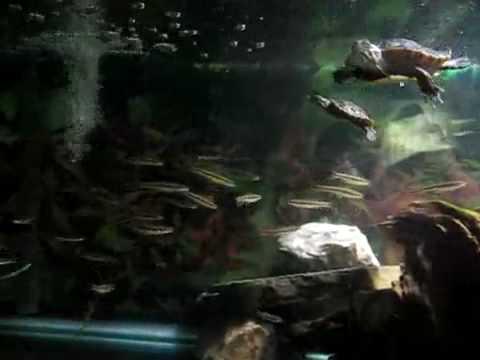 My Painted Turtle Tank Setup
