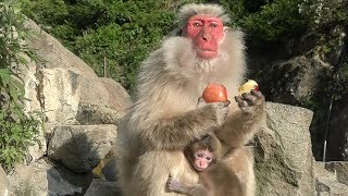【SNOW MONKEY】☆Great Mother's Story☆ About
