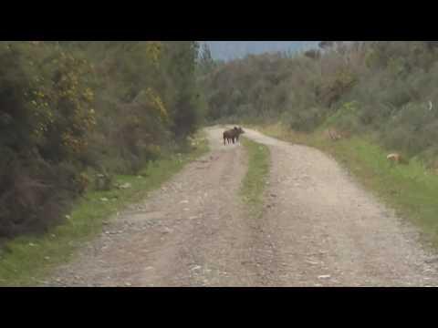 West coast New Zealand Hunting