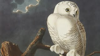 How Audubon's Birds of America Changed Natural History