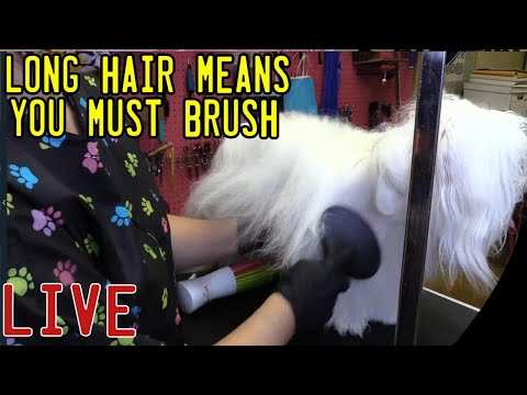 your-dog-must-be-brushed-daily-to-look-like-this