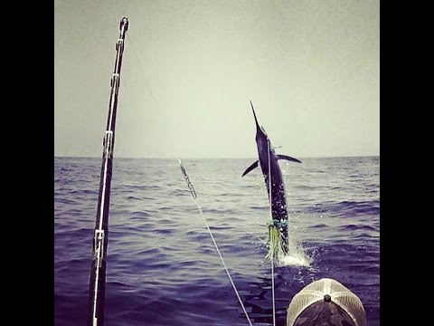 Cape Verde Blue Marlin Fishing 2015