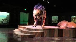 Dinosaur Experience at Natural History Museum Los Angeles . T-Rex