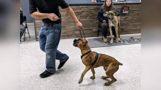 Dog Obedience Group Class January 2020