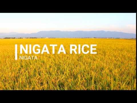 jnto nigata rice