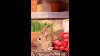 Bunnies gone wild Thumbnail