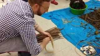 processing dogbane fibre for spun yarn