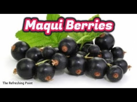 Maqui Berries Sacred Fruit of the Mapuche Indians -Benefits Premature Aging, Weight Loss & Diabete