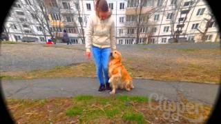 Красивый клип про собаку