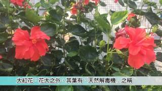 Publication Date: 2017-03-27 | Video Title: 航拍比賽2017-裘錦秋中學(屯門)--更新