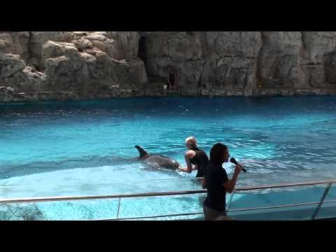 Dolphin Show at Texas State Aquarium