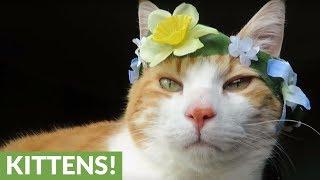 Cute cat models various flower crowns