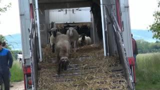 Arrivée des tondeuses à gazon au Fronholz