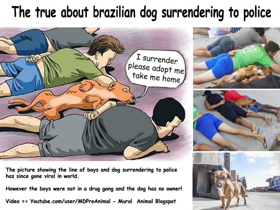 The True About Brazilian Dog Surrender To The police - YouTube