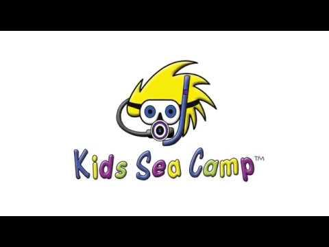 Kids Sea Camp, Roatan in Summer of 2018