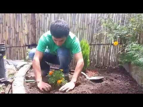 Vote no on consejos para dise o de jard n for Como organizar jardines pequenos