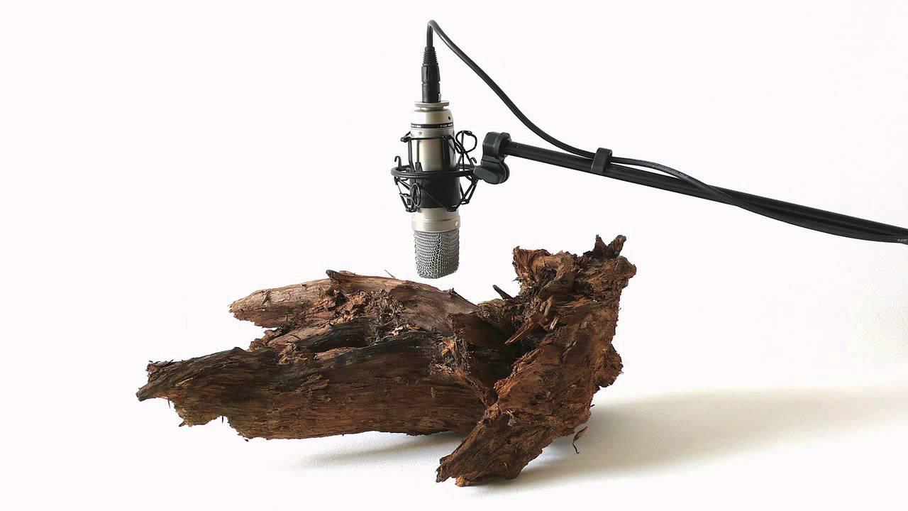 Carcoma ruido que sonido hace la carcoma al devorar la - Fotos de carcoma ...