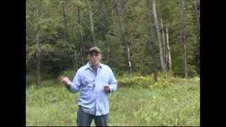 Gundog Training: Teaching A Springer Spaniel To Quarter A Hunting Pattern