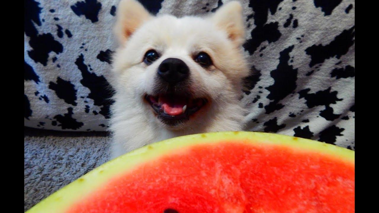 Cute animals eating watermelon