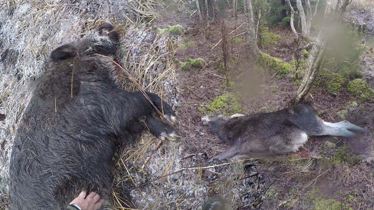 Охота #64 закрытие сезона на лося