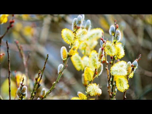 Изображение предпросмотра прочтения – КсенияПолякова читает произведение «Весна, весна! как воздух чист!..» Е.А.Баратынского