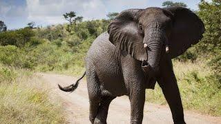 #2108. Слоны (В мире животных)