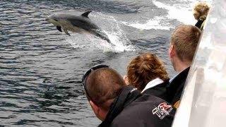 Doubtful Sound Wilderness Cruises - Real Journeys, New Zealand