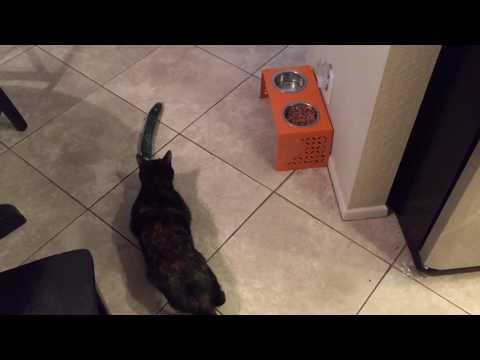 "Wendy ""The Cat Dog"" VS Cucumber"