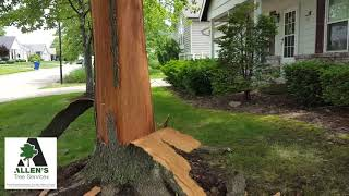 Allen's Tree Service - Storm Damage Lightening - Tree Service St. Louis