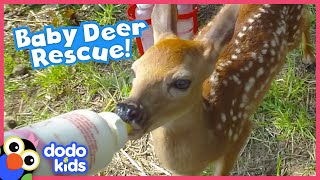 Lost Baby Deer Asks People To Rescue Her | Animal Videos For Kids | Dodo Kids