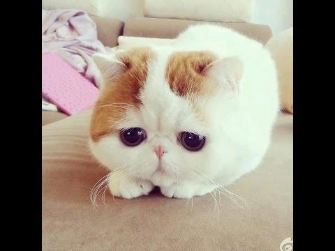 Những chú mèo đáng iu nhất hành tinh!.