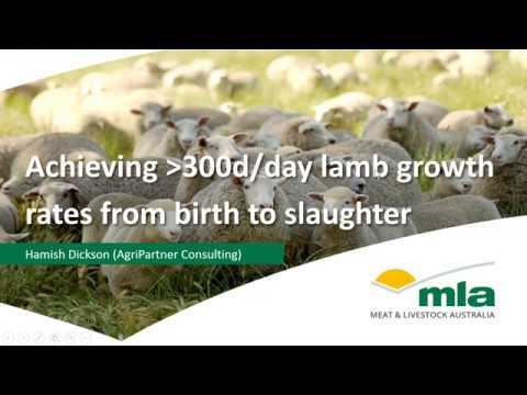 Achieving 300g/day prime lamb growth rates | Sheep Productivity & Profitability webinar