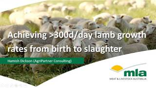 Achieving 300g/day Prime Lamb Growth Rates  Sheep
