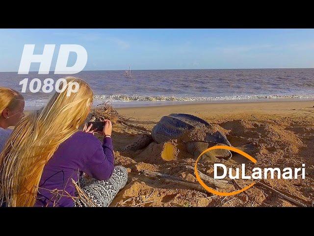 Drone flight: Diana strand, Braamspunt Suriname 2016