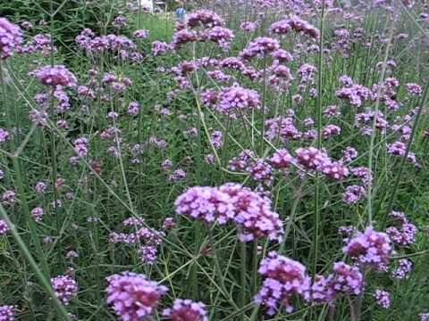 RHS Garden Wisley - Surrey #6