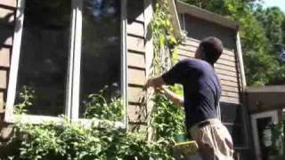 Guiding Climbing Plants
