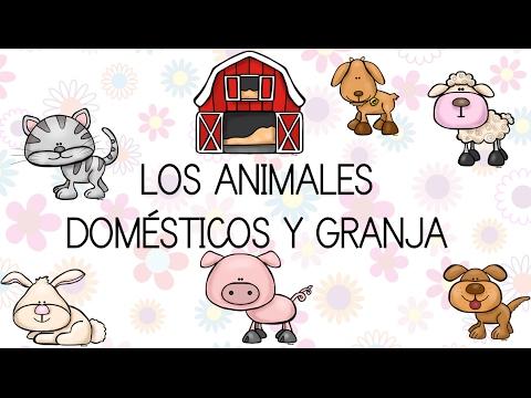 Los Animales Domésticos Y De Granja Con Dibujos Divertidos Video