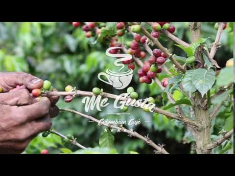 100% Organic,  Fair Trade, Speciality Colombian Coffee