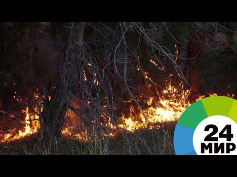 Амазонка в огне: леса Южной Америки гибнут в лесном пожаре