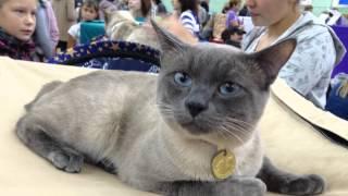 Выставка кошек в Мурманске