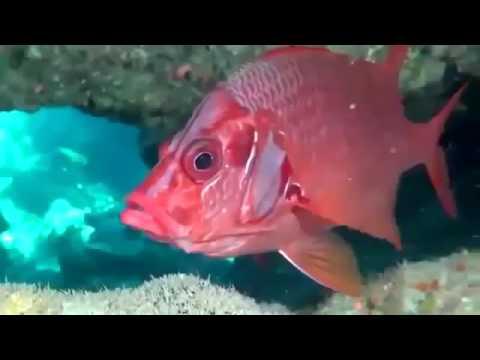 2017 HD Documentary On Coral - Deep Ocean Coral Reef Adventure