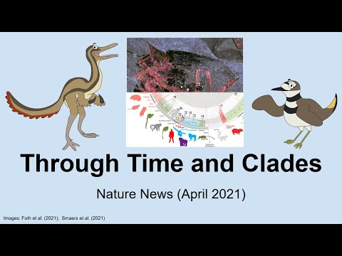 Through Time And Clades