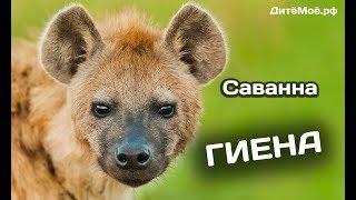 Гиена. Энциклопедия для детей про животных. Саванна