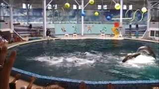 дельфинарий евпатория, отдых в Крыму (Крым)(дельфинарий евпатория, отдых в Крыму, зашел в дельфинарий города евпатория, посмотрел замечательное шоу..., 2014-08-19T21:17:21.000Z)