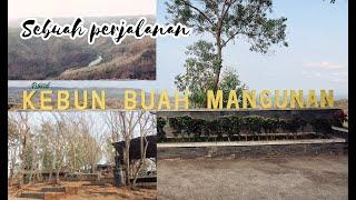 Download KEBUN BUAH MANGUNAN DI PAGI HARI | #sebuahperjalanan3