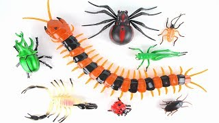 Animal Planet Giant Insect Adventure! Fun Bug Toys for Kids! Learn Monster Insect.