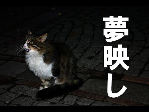 コンクラーベ 斎藤 一人